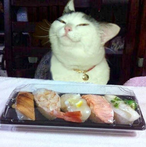 1-funny-cat-121-33
